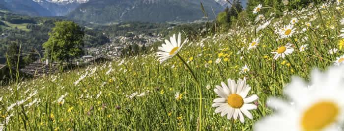 Mayrhofen-bloemen in het ZIllertal