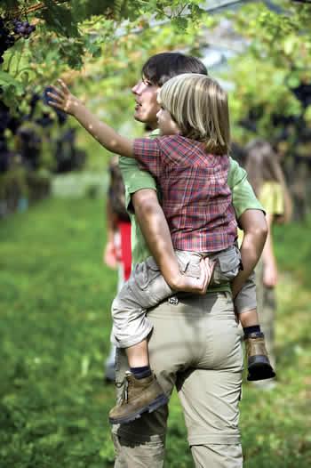 Wijngaarden in Marling
