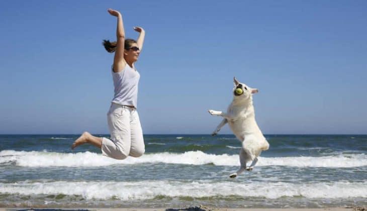 Vakantiehuizen met hond(en)