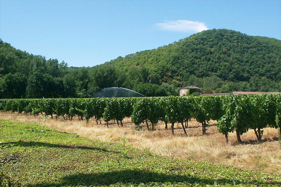 Camping Les Vignes bij Puy-l'Évêque (Lot)